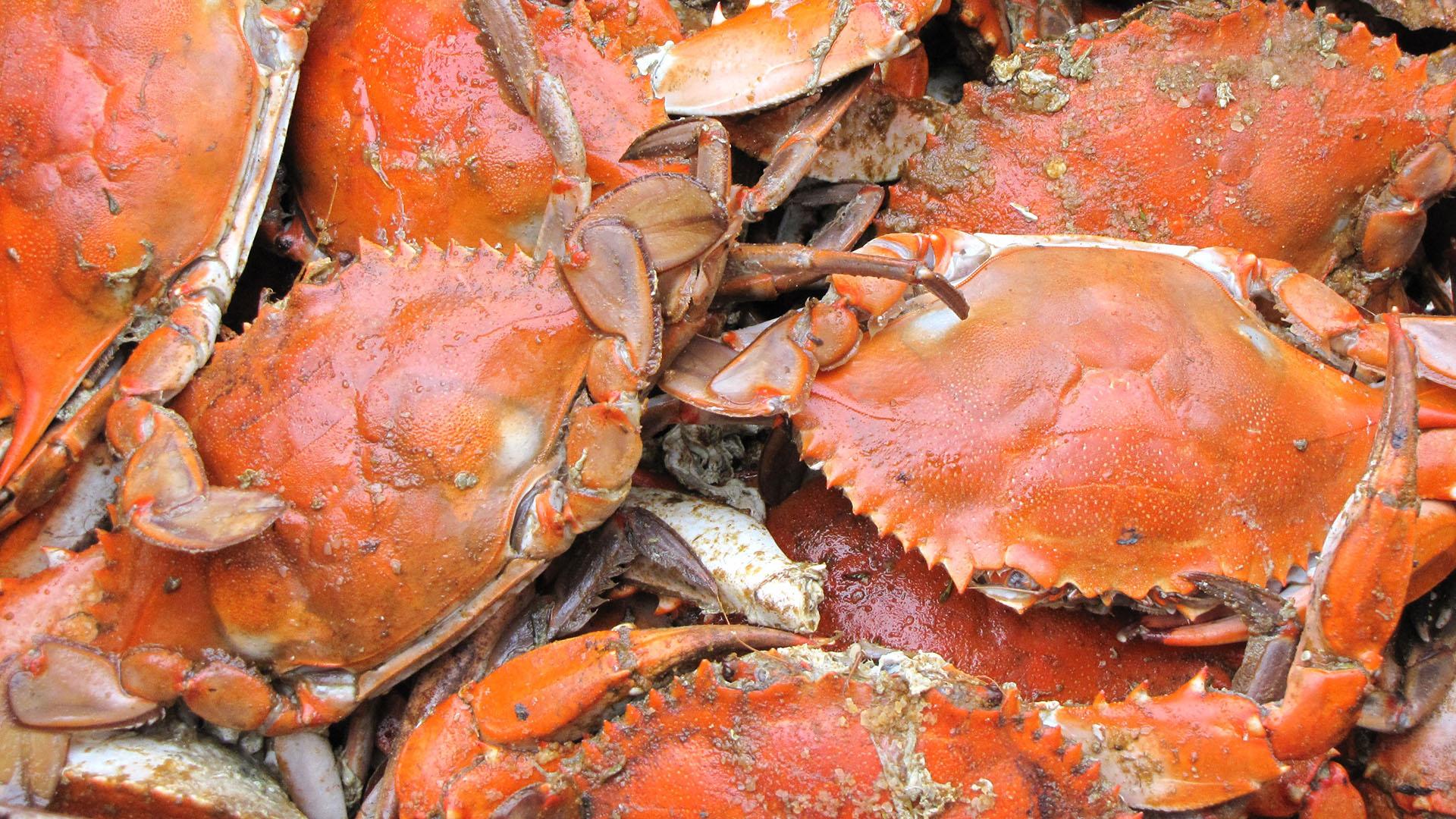 North Nova Seafoods Rock Crab